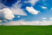 Harika alan buğday ve gökyüzünün bahar tarafından. — Stok fotoğraf