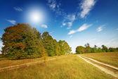Wunderbare große Eichen und Himmel bis zum Herbst. — Stockfoto