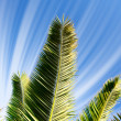 Wonderful green branch of palm against blue sky. — Stock Photo