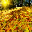 Beautiful golden autumn in the forest. — Stock Photo #6504334