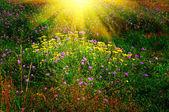 夏の芝生の上のすばらしい夕日. — ストック写真