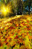 Beautiful golden autumn in the forest. — Stock Photo
