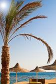 Beautiful tropical beach in the Egypt. — Fotografia Stock