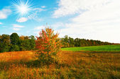 Autumnal panorama of field. and grove. — Stock Photo