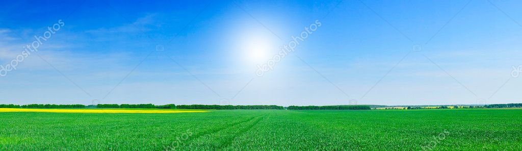 Panoramic view of green field of wheat and gold colza  by springtime.         Stock Photo #6507531