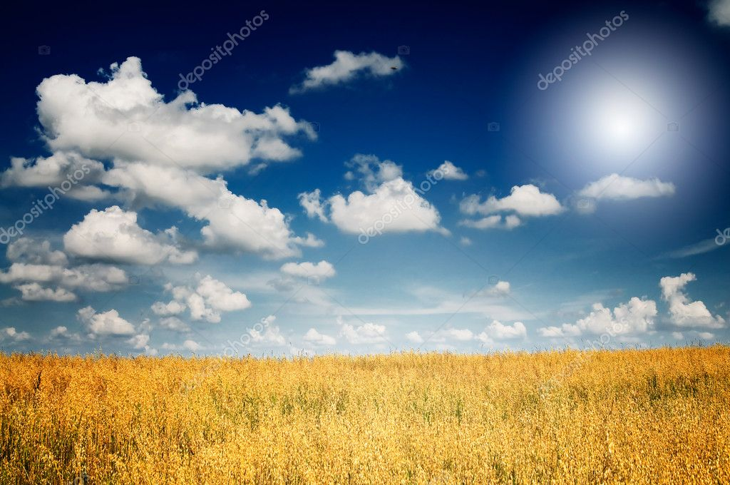 Finest harvest of golden oats. — Stock Photo #6507748