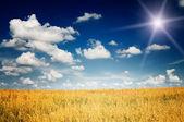 Nice oats field. — Stock Photo