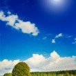 Panorama of field by autumn. — Stock Photo #6521117