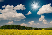 Incredibile immagine sole, campo e blu cielo. — Foto Stock