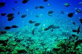 Astonishing undersea world of Red sea. — Stock Photo