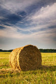Beautiful stubble field with hay bales by summer. — Stock Photo
