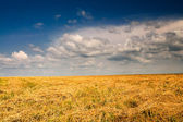 Mown field of wheat and amazing blue sky with white clouds. — Stock Photo