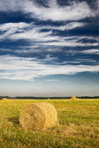 Field with bales against tender clouds. — Stock Photo