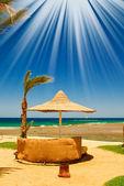 Palm, parasol et mer contre le ciel bleu. — Photo