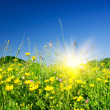 Nice field flowers against the blue sky and fun sun. — Stock Photo