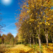 Vivid autumn grove. — Stock Photo