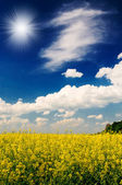 Excellent golden rapeseed field and white clouds. — Stock Photo