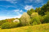 令人惊讶的蓝蓝的天空和开花的树. — 图库照片