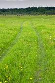 Green pasture — Stock Photo