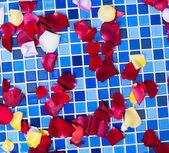 Rozenblaadjes op een mozaïek tegel — Stockfoto