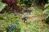 Watering the Lawn with Sprinkler — Stock Photo