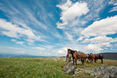 Harnessed horses against mountains — Stock Photo