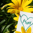 Happy Mothers Day — Stock Photo #5584340