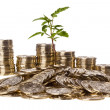 Coins and Plant — Stock Photo #6065176