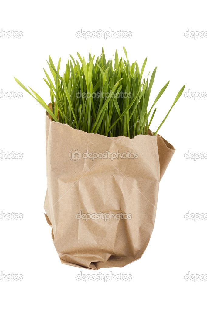 Green organic wheat grass in a brown bag. — Stock Photo #6249811