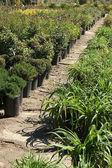 Plantas verdes — Foto Stock