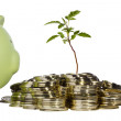 Plant and Savings — Stock Photo