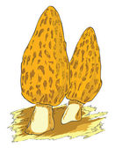 Morel - a poisonous mushroom — Stock Vector