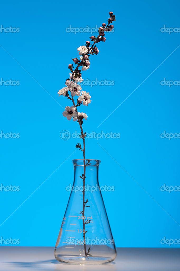 Tea tree branch in a laboratory test tube. — Stock Photo #6694236