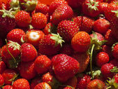 Just the collected strawberry. — Stock Photo