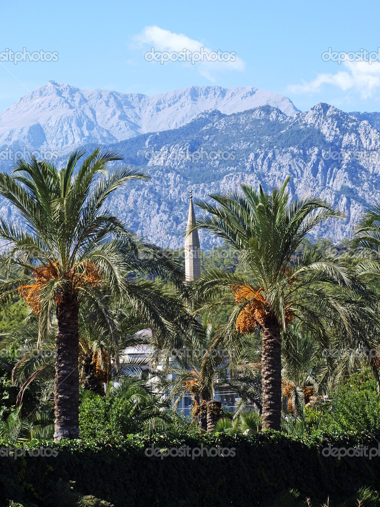 Landscape. Palm trees, a minaret on a background of mountains. Turkey.  Stock Photo #5920322