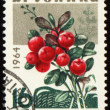 Branch of cowberry on post stamp — Stock Photo