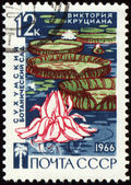 Waterlily in botanical garden on post stamp — Stock Photo