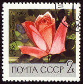 Red rose on post stamp — Stock Photo
