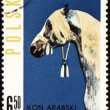 Stock Photo: Arabihorse on post stamp