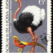 Ostrich and golden pheasant on post stamp — Stock Photo