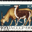 Antelope on post stamp — Stock Photo