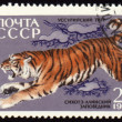 Jumping tiger on post stamp — Stock Photo