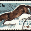 Mink on post stamp — Stock Photo