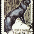 Black fox on post stamp — Stock Photo
