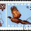 Stock Photo: Fowl bird on post stamp
