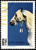 Arabian horse on post stamp — Stock Photo