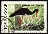 Black stork on post stamp — Stock Photo