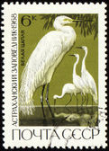 Egret on post stamp — Stock Photo