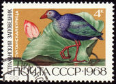 Sultan hen on post stamp — Stock Photo