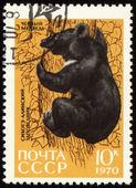Black bear on post stamp — Stock Photo